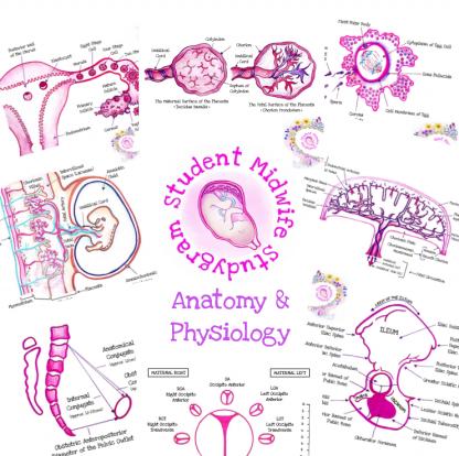 Anatomy & Physiology Flashcards