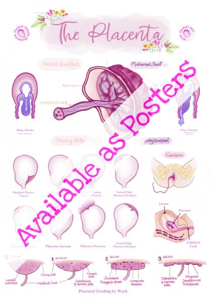 Placenta Poster 1