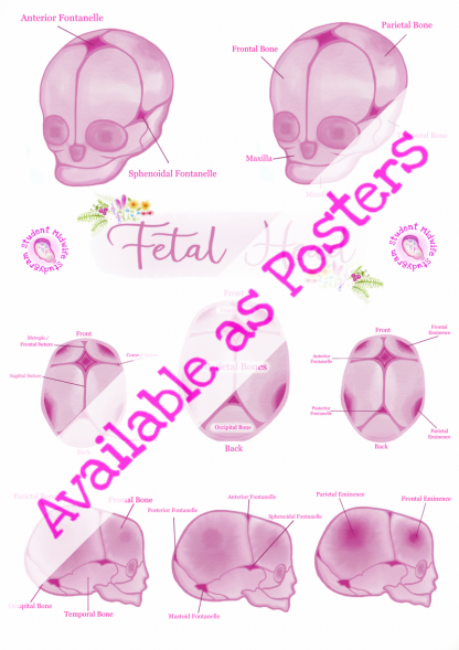 Fetal Head Poster 2