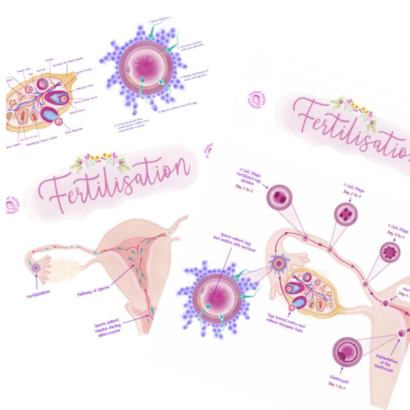 The Fertilisation Poster Pack
