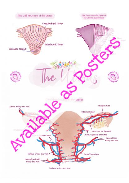 The Uterus Posters