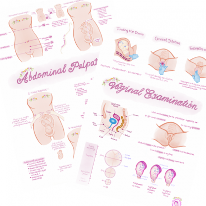 Vaginal Examination and Abdominal Palpation Posters