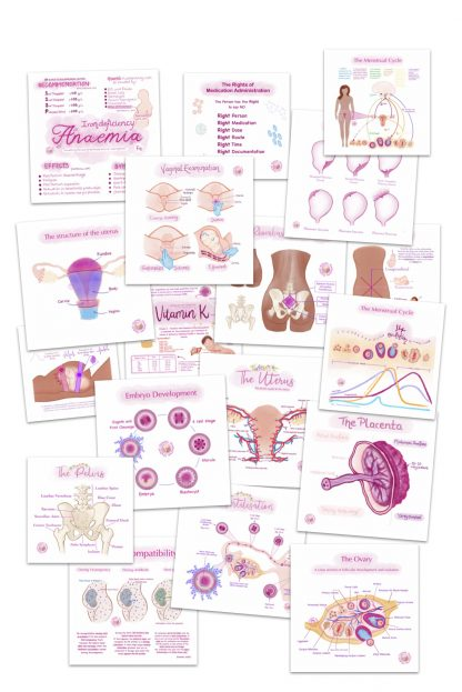 Anatomy and Physiology Flashcards