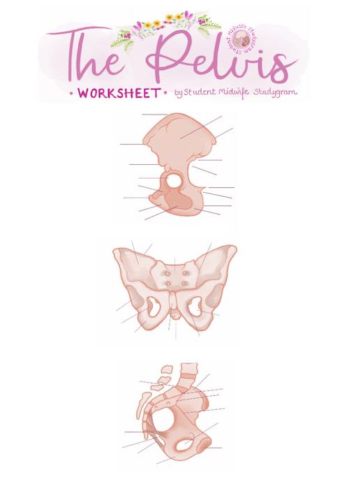 The Pelvis Worksheet 1