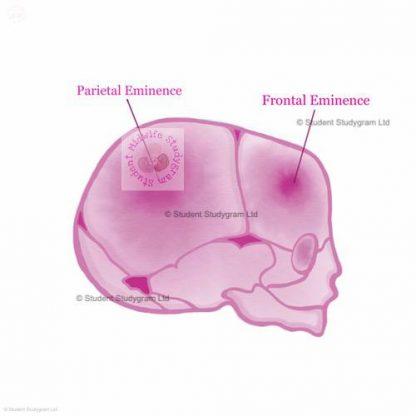 Fetal Head Digital Download